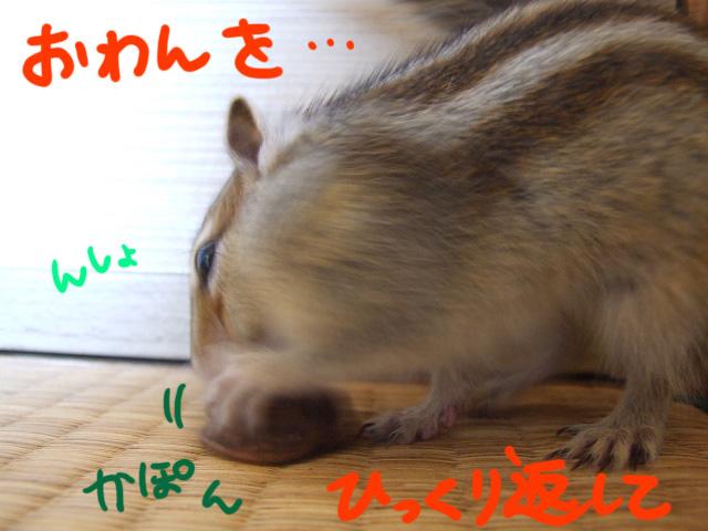 DSCF9593a.jpg