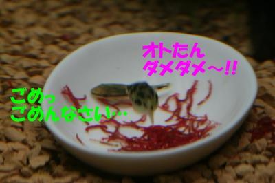 (#゚Д゚) コラーッ!!