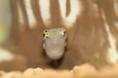 ・・・カエル?