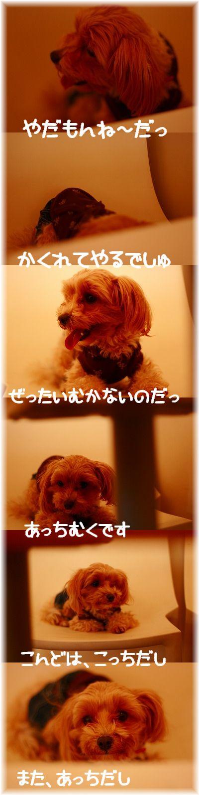 IMG_25661.jpg