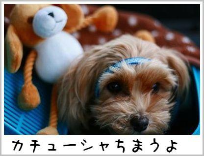 IMG_26851.jpg