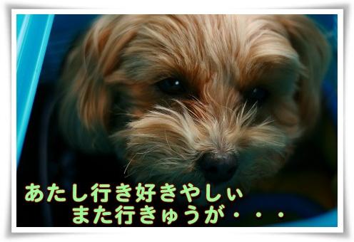 IMG_48r56.jpg