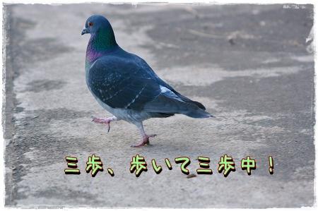 IMG_49j65.jpg