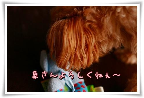IMG_50bw74.jpg