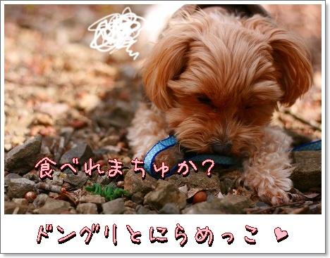 IMG_51jt41.jpg