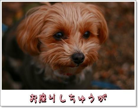 IMG_5te146.jpg