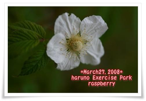 IMG_608h8.jpg