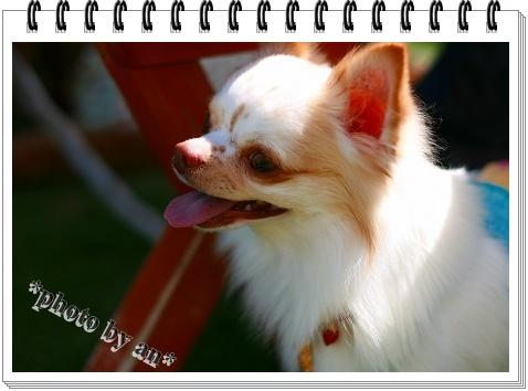 IMG_9217.jpg