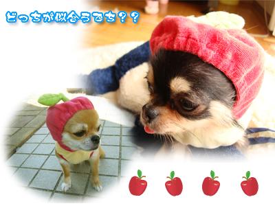 りんごさん3