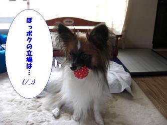 25-10_20080825210804.jpg