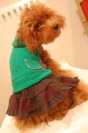 8.18 ミルフィー newお洋服 as know as de wan ?