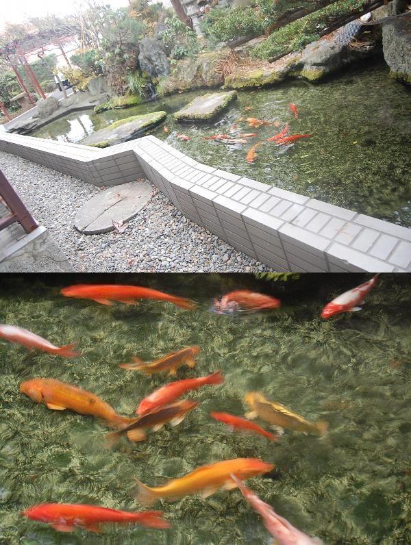 池鯉 11.22