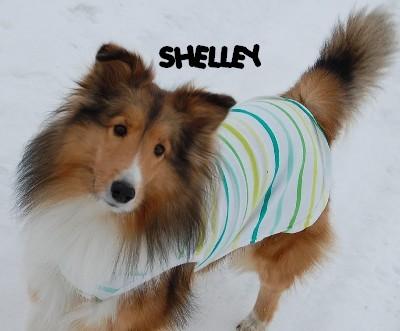 2.11 Shelley