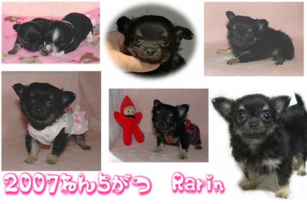 Rarin 2009.2.20