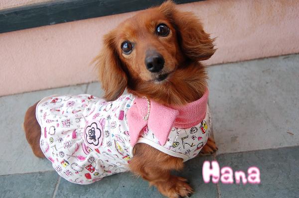 LegallyBlonde×PinkGold ELLES COLLECTION DRESS Hana