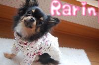 3.17 Blog Rarin