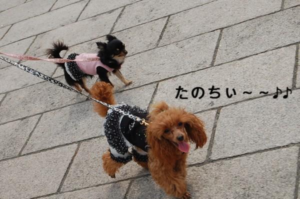 5.2 お散歩 1