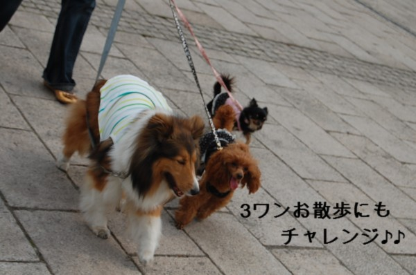 5.2 お散歩 2