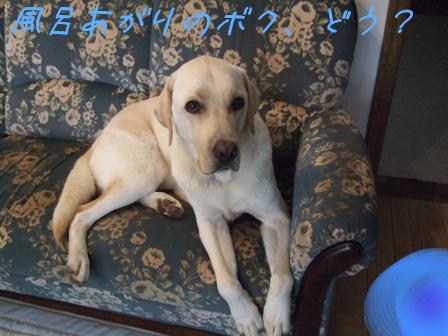 2008_09275gatu0004.jpg