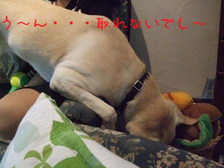 2008_10055gatu0008.jpg
