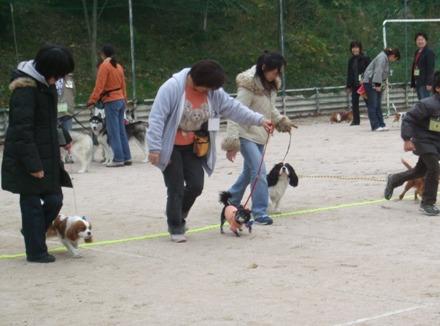 2008_11095gatu0011.jpg