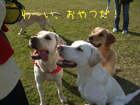 2008_12085gatu0035.jpg