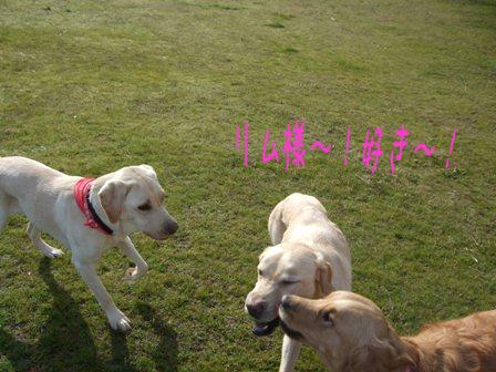 2008_12085gatu0038.jpg