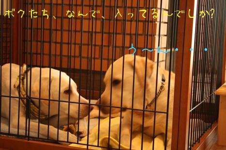 2009_02095gatu0087.jpg