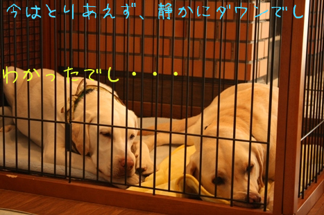 2009_02095gatu0089.jpg