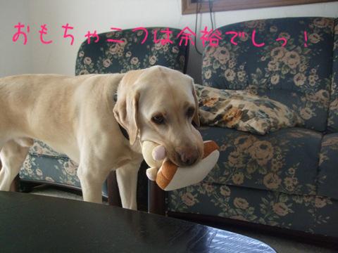 2009_04085gatu0008.jpg