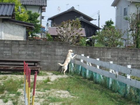 2009_05235gatu0013.jpg