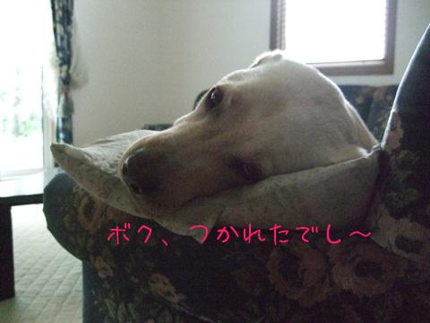 2009_06225gatu0001.jpg