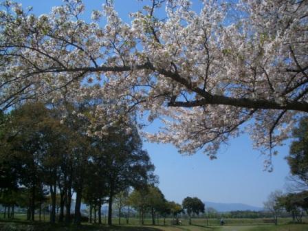2009.4.10奈良 065