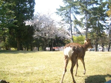 2009.4.10奈良 076