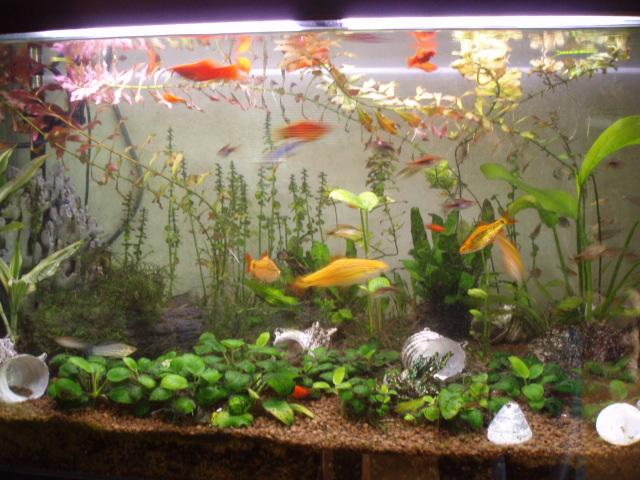 熱帯魚 001