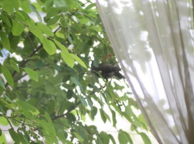 2009 0601薔薇50D 022_3