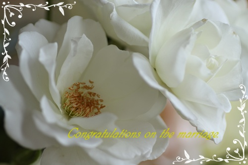 2009 0601薔薇50D 011