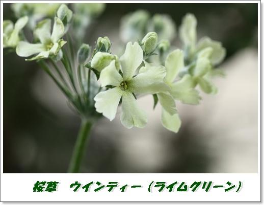 IMG_4190_1.jpg