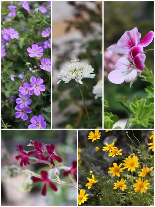 garden0706.jpg