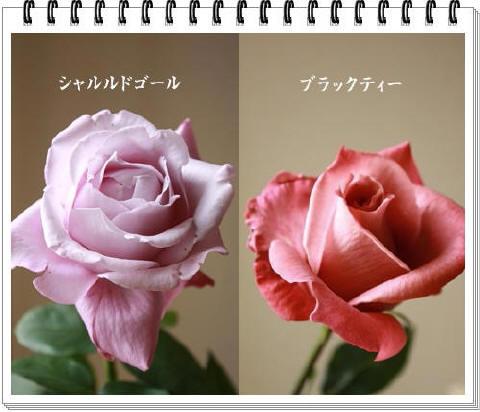 pagebara_1_1.jpg