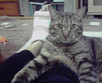 猫とギプス