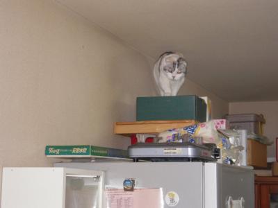 冷蔵庫の上のモモ