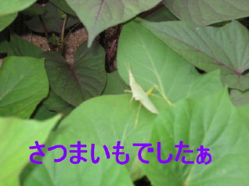 IMG_0050_2_1.jpg