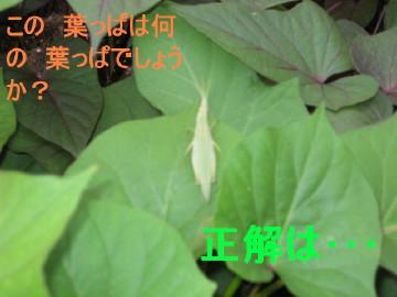 IMG_0051_2_1.jpg