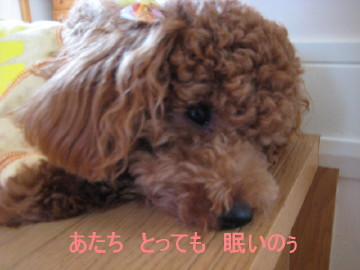 IMG_0095_1.jpg