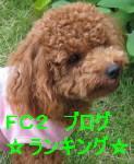 IMG_0373_2_1.jpg
