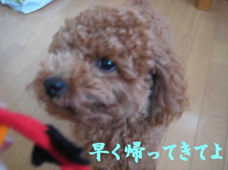 IMG_0991_1.jpg