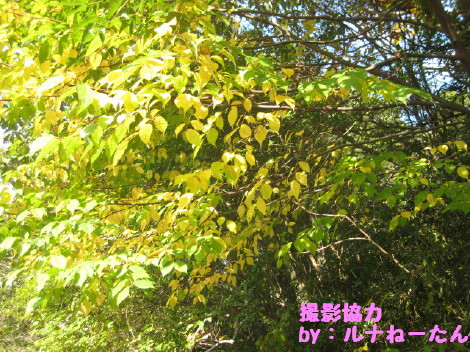 IMG_1705_2.jpg