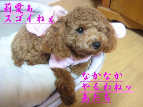 IMG_2210_1.jpg