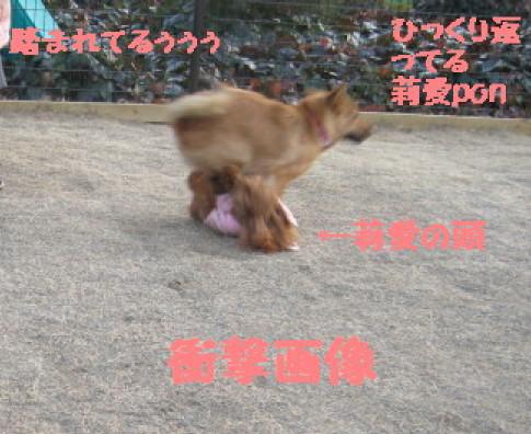IMG_3498_1.jpg